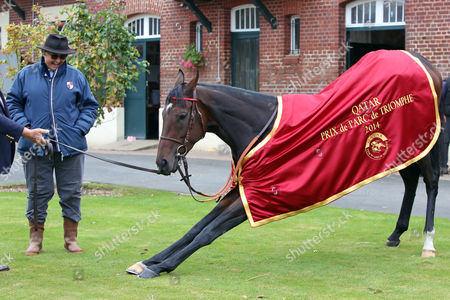 , Chantilly, France, Knee fall, A portrait of Treve with Trainer Criquette Head-Maarek the day after winning the Prix de l'Arc de Triomphe twice.