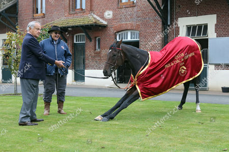 , Chantilly, France, Knee fall, A portrait of Treve with Trainer Criquette Head-Maarek and Alec Head the day after winning the Prix de l'Arc de Triomphe twice.
