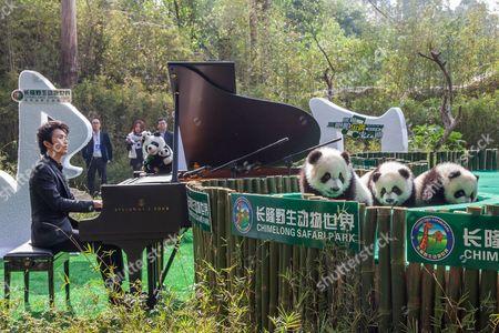 The panda triplets and pianist Li Yundi