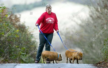 ELLI BURNS WALKING HER PET PIGS SPOT AND GINGER ROGERS - DEFRA ( DEPARTMENT FOR ENVIRONMENT, FOOD AND RURAL AFFAIRS ) HAVE NOW INSTRUCTED OWNERS OF PET PIGS TO APPLY FOR A PIG PET WALKING LICENCE BEFORE THEY TAKE THEIR PIGS FOR A WALK. A DEFRA VET WILL BE SENT TO INSPECT THE PROPOSED ROUTE