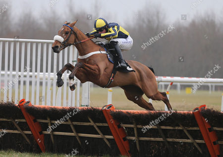 RED SPINNER Ridden by Jason Maguire wins at Musselburgh