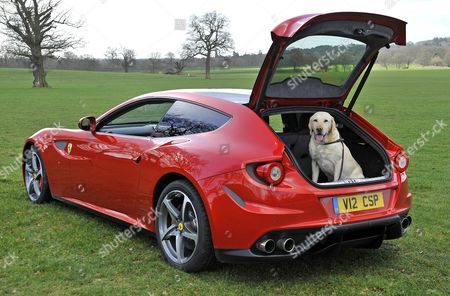 Launch Of The New Ferrari Ff. A Super Car With A Big Enough Boot To Carry A Dog.  Pictured Model Kirsty Heslewood With Five Year Old Labrador 'jake' And The Ferrari Ff At Coworth Park Ascot Berks.  27/2/14.
