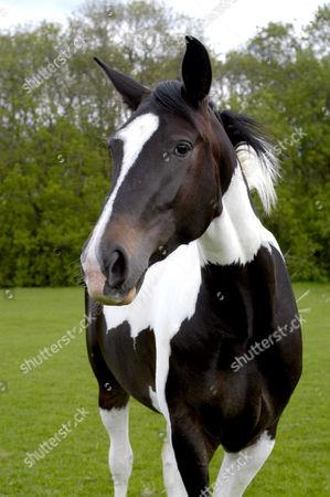 Horse belonging to Suzanne Dando