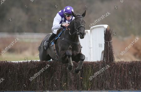HAVE YOU HAD YOURS Ridden by James Reveley wins at Newcastle