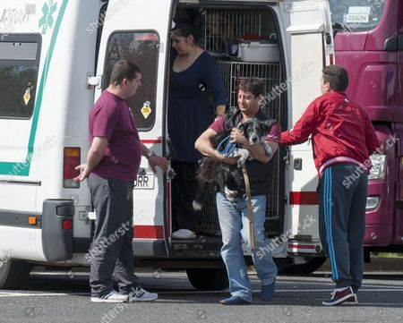 Stray Dogs Imported From Romania By The Charity K9rescue Are Handed Over To Recipients At Lakeside Services ( Thurrock) Following Their Arrival Via Eurostar. 5.04.14