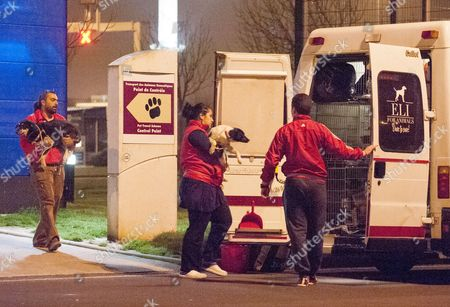 Stock Picture of Stray Dogs Imported From Romania By The Charity K9rescue Being Processed At The Animal Reception In Calais. 5.04.14