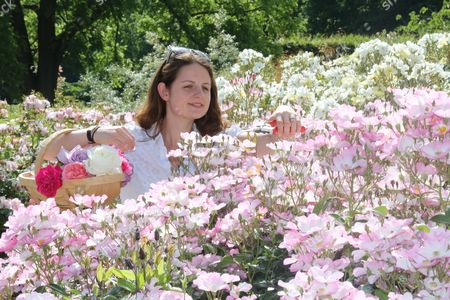 Stock Image of Staff member Emma Pike in the rose garden