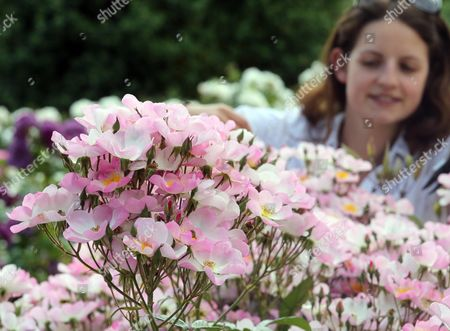 Stock Photo of Staff member Emma Pike in the rose garden