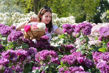 Stock Picture of Staff member Emma Pike in the rose garden