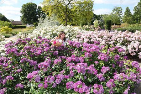 Editorial image of Rose garden at RHS Garden Wisley, Surrey, Britain - 18 Jun 2015
