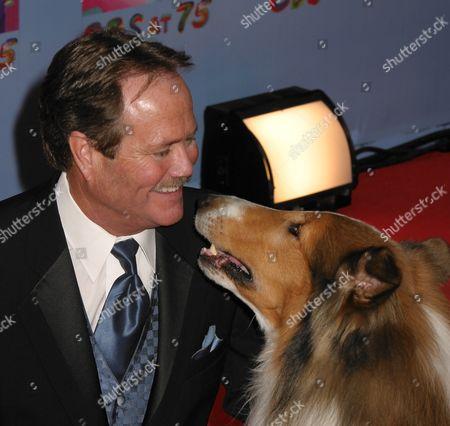Stock Image of Jon Provost, Lassie