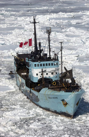 The Farley Mowat ship run by Sea Shepherd animal activist group. Canada's annual seal hunt under way on the frozen ice of the Gulf of St. Lawrence. The contoversial cull targets seal pups and draws activists from around the world. Canada has set a quota allowing 319,500 seal pups to be killed this year, one of the largest quotas in the last 50 years.