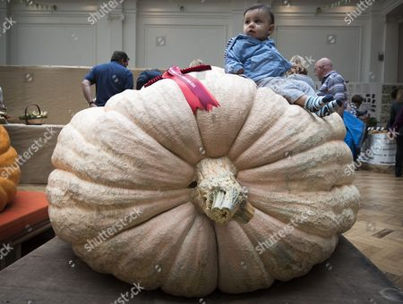 Henry Watkins 13 months from Victoria sat on the first prize 509kg  Pumpkin grown by Ian Paton.