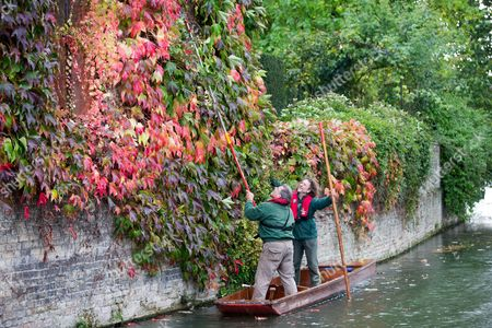 St Johns College gardeners Adam Magee (right) and his colleague Mick Ranford on a punt on the River Cam trimming the wall of Boston Ivy