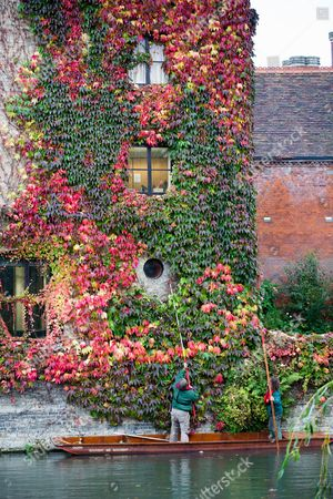 Stock Image of Picture shows St Johns College gardeners Adam Magee (right) and his colleague Mick Ranford on a punt on the River Cam in Cambridge trimming the wall of Boston Ivy