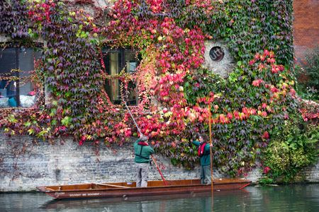Stock Photo of Picture shows St Johns College gardeners Adam Magee (right) and his colleague Mick Ranford on a punt on the River Cam in Cambridge trimming the wall of Boston Ivy