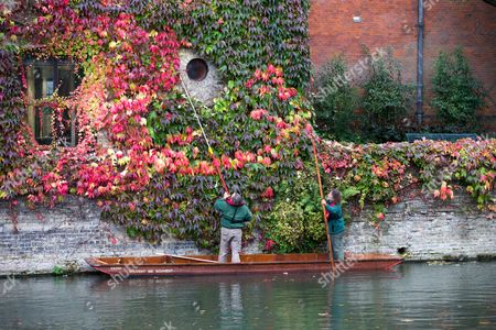 Editorial picture of Gardeners on punt trim Boston ivy at St John's College, Cambridge, Britain - 15 Oct 2015