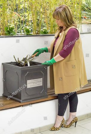 Stock Image of Coleen Nolan planting the Memorial Rose