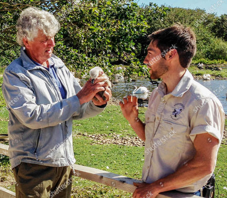 Paul Heiney holds a cygnet and speaks to a ranger at the Abbotsbury Swannery in Dorset