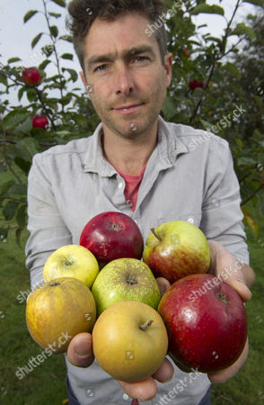 Orchardist Tom Adams with apple trees at  the Cambrian Railway Orchard Project