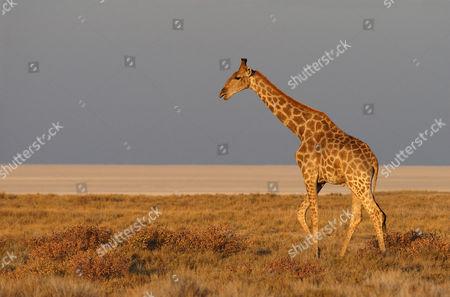 Saltpans Stockfoto S Redactionele Afbeeldingen En Stockafbeeldingen Shutterstock