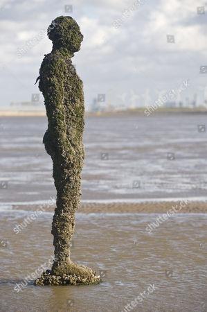 Marine organisms incrusting sculpture, Antony Gormley's 'Another Place', Crosby Beach, Liverpool, Merseyside, England, United Kingdom, Europe