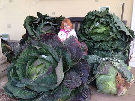 Three-year-old Elizabeth Edwards with giant cabbages