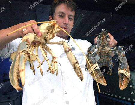 Dylan Taylor holding white and normal coloured lobsters