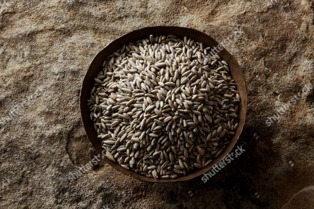 Rye grains (Secale cereale) in a copper bowl on a stone surface