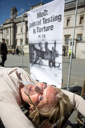 "PETA founder Ingrid Newkirk in a medieval torture device and fitted with a gas mask hooked to tanks of ""toxic chemicals"" to protest of the Ministry of Defence's (MoD) recently revealed use of 57 monkeys in cruel and deadly laboratory tests"