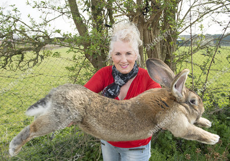 Annette Edwards From Stoulton Worcestershire Who Has A Champion Giant Rabbit Darius And His Son Jeff Who Is Catching Up Fast.
