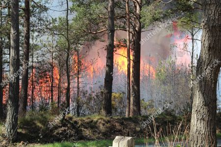 Stock Image of Huge flames, fanned by winds, spread across woodland owned by the Newbury MP Richard Benyon.
