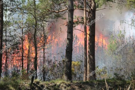 Editorial picture of Fire in Burghfield forest on the Englefield Estate, Berkshire, Britain - 04 May 2016