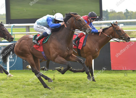 (L) Humphrey Bogart (Sean Levey) wins The Betfred Derby Trial Stakes from (R) Carntop (F.M.Berry) @ Lingfield Park racecourse. 7.5.16. Pic: HUgh Routledge