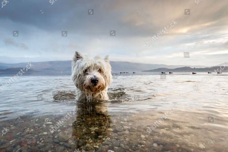 Editorial image of Kennel Club Dog Photographer of the Year competition - Jun 2016