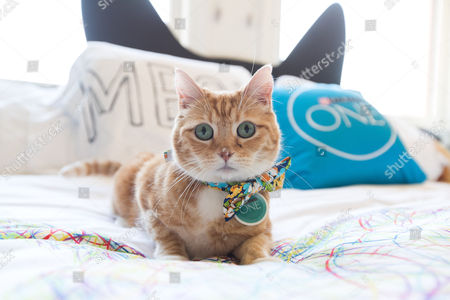 Instagram celebrity cat @FinfortheWin entertains guests of Purina ONE's Whole Body Health Hotel in Los Angeles