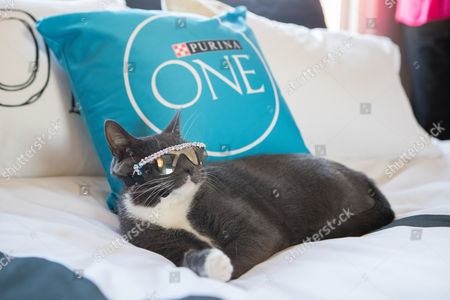 Instagram celebrity cat @SunglassCat entertains guests of Purina ONE's Whole Body Health Hotel in Los Angeles