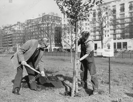 Sir Hugh Casson Architect Planting A Tree At Park Lane During National Tree Week. Box 674 22403166 A.jpg.