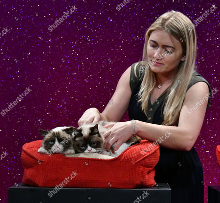 Stock Photo of Grumpy Cat animatronic figure, Grumpy Cat, Tabatha Bundesen (owner)