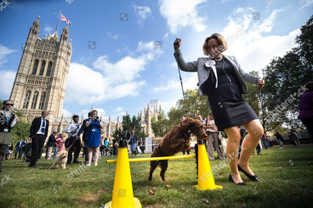 Editorial picture of Westminster Dog of the Year Competition, London, UK - 08 Sep 2016