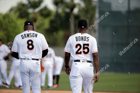 Andre Dawson, Barry Bonds Miami Marlins special assistant coach Andre Dawson, left, and hitting coach Barry Bonds walk together during spring training baseball practice, in Jupiter, Fla