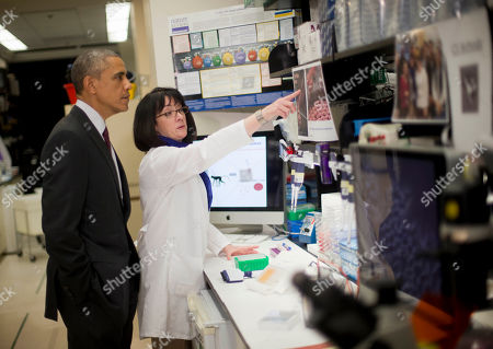 Stock Picture of Barack Obama, Nancy Sullivan President Barack Obama listens as Dr. Nancy Sullivan, Senior Investigator; Chief, Biodefense Research Section, National Institute of Allergy and Infectious Diseases, during a NIH tour of the Vaccine Research Center at the National Institutes of Health (NIH), in Bethesda, Md