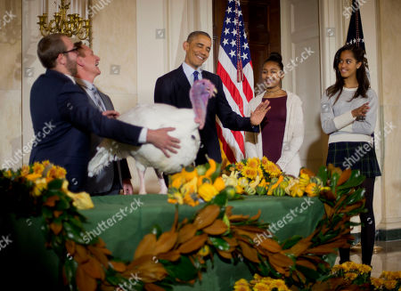 """Barack Obama, Sasha Obama, Gary Cooper, Cole Cooper President Barack Obama, center, with daughters Sasha, second from right, and Malia, right, carries on the Thanksgiving tradition of saving a turkey from the dinner table with a """"presidential pardon"""" of 'Cheese' in the Grand Foyer of the White House in Washington, . Also with Cheese are Gary Cooper chairman of the National Turkey Federation and owner of Cooper Farms and his son Cole Cooper, far left"""