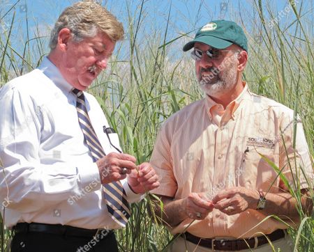 Randy McNally, Joe DiPietro State Senate Finance Chairman Randy McNally, R-Oak Ridge, and University of Tennessee President Joe DiPietro, right, tour switchgrass crops in Vonore, Tenn., on
