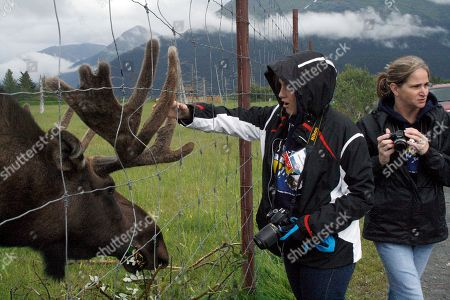 Julie Robinson, Jennifer Hankins Jennifer Hankins of San Diego, left, pets moose during a visit with Julie Robinson, of Ligonier, Pa., at the Alaska Wildlife Conservation Center near Girdwood, Alaska, during an Alaska Adventure excursion. The event was organized by Tragedy Assistance Program for Survivors for a group of about 75 widows of military veterans to share memories of loved ones while while hiking rugged trails and rafting the rapids