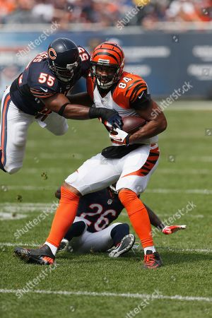 Editorial image of Bengals Bears Football, Chicago, USA