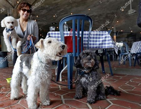 """Stock Image of Michelle Vargas, Carmine, Lucy, Luigi Michelle Vargas, with, from left, 8-year-old Bichon Frise-Poodle mix """"Carmine,"""" 11-year-old Wire Haired Terrier """"Lucy,"""" and 10-year-old Shih Tzu-Poodle mix """"Luigi,"""" visit a cafe in a Manhattan park, on New York's Upper West Side. New York City restaurants with outdoor tables will soon be able to welcome four-legged guests under new rules announced by the city Health Department.The regulations announced, will permit dogs that are licensed and vaccinated against rabies to join their human chowhounds at participating restaurants"""
