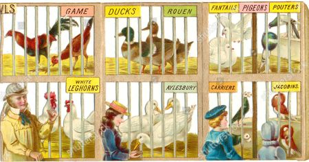 Stock Photo of Chromolithographed diecut relief booklet of a Bird Show published by Raphael Tuck & sons circa 1890. Three pages shown.
