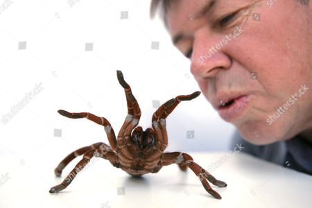 Hollywood animal trainer Jules Sylvester, originally from Devon, Britain, has worked along side Hollywood's elite with his spiders, snakes, cockroaches, lizards, frogs and bugs. His credits include, 'There's Something About Mary', 'Jurassic Park', 'The Hulk' and 'Men In Black'. Jules Sylvester with a spider