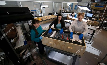 Stock Picture of Collections technicians Ashley Scott, from left, Severine Craig and Taylor Barrett pack a crate of artifacts at the Penn Museum in Philadelphia. The archaeology museum has moved thousands of ancient treasures offsite and is using vibration sensors to monitor delicate items still on display while an earth-shaking demolition project continues next door
